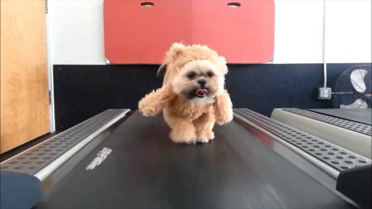 What Happens When You Mix a Small Dog, an Old Teddy Bear and a Treadmill?