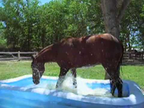 For Anyone That Loves Horses – Watch What Happens When This Horse Stumbled Across a Kiddie Pool