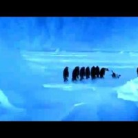 Penguin Slips On Ice and Makes Adorable Sound – Listen To It, Do You Think It's Real?