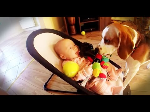 This Dog Stole The Baby's Toy – What He Did Next To The Baby Was Even More Bizarre