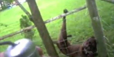 This Police Officer Saved This Dog Stuck In a Fence, But This Dog Had Something Else Planned