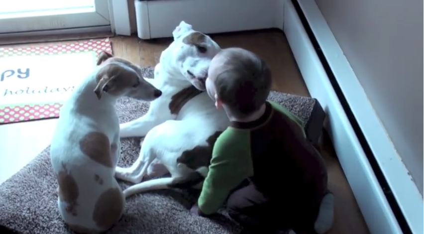 This Pit-bull Can't Keep Away From This Baby, He's Nonstop Kissing and Loving This Kid