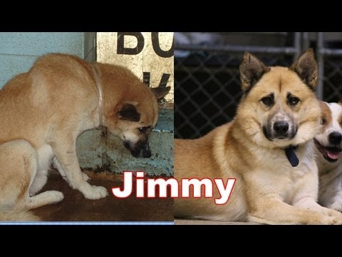 This Dog Was Almost Euthanized, But They Rescued Him At The Last Minute – Watch His Amazing Transformation