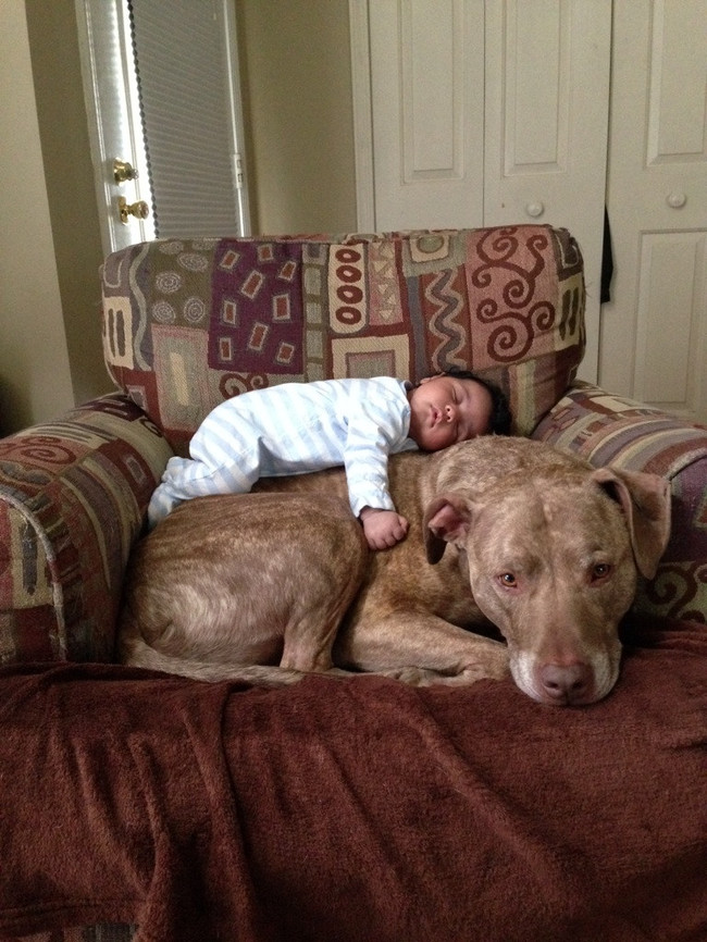 Top 6 Reasons Why You Need To Have A Pit Bull At Home! #SugarRush!