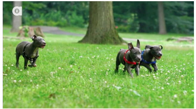 Did You Know This About Pitbulls – 1:24 in This Video Is Proof, Thank You Science!