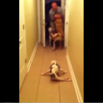 Pup Unable to Walk Lets Nothing Stop Her from Reuniting With Her Daddy After 6 Months. AWWW