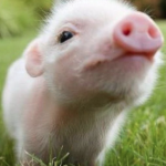 This Tiny Piglet Was ABANDONED. Wait Until You See Who Came to the RESCUE