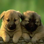 Top 15 Cutest Dog Pictures In The World! These Dogs Are So Cute You'd Want To Eat Them! Not Literally Though…
