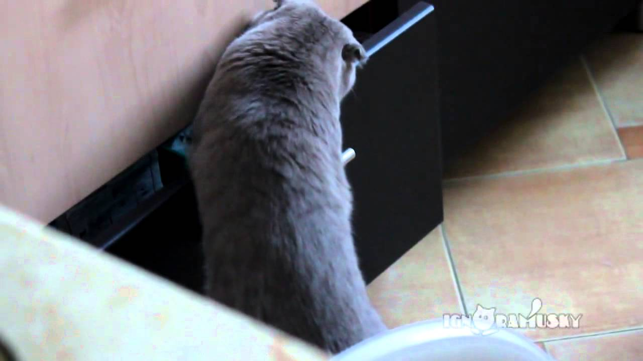 This Cat Thinks He's Super Sneaky! Watch How He Reacts When He Gets Caught! Hilarious!