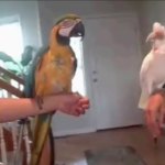 Two Birds Challenged Each Other To A Dance-Off! The Results? EPIC! A MUST WATCH!