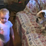 This Baby Is Having An Argument With A Bulldog. I Think It's About A Ball? LOL It's Hilarious!