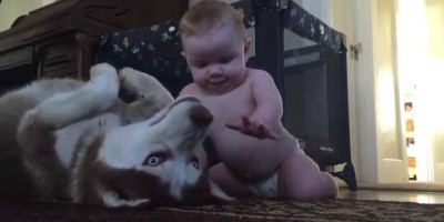 Baby Plays With Dog for the First Time and the Result is ADORABLE!