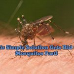 My MOSQUITO Problems Have Been SOLVED With This Simple Home Made Solution