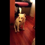 This Innocent Looking Dog Just Knocked Over The Trash, But How He Got Out Of Trouble Has Me Cracking Up!