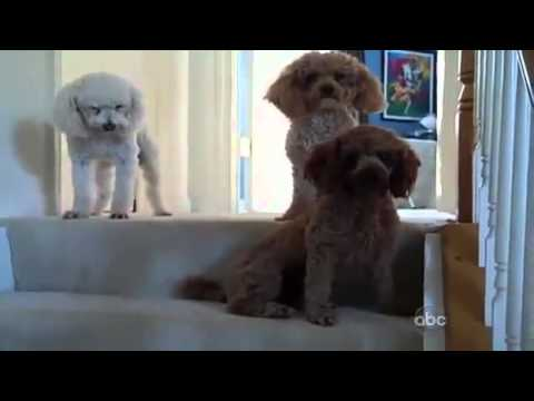 Maggie The Adorable Pup Gets Rattled Out By Her Friends! See How She Pleads Guilty!