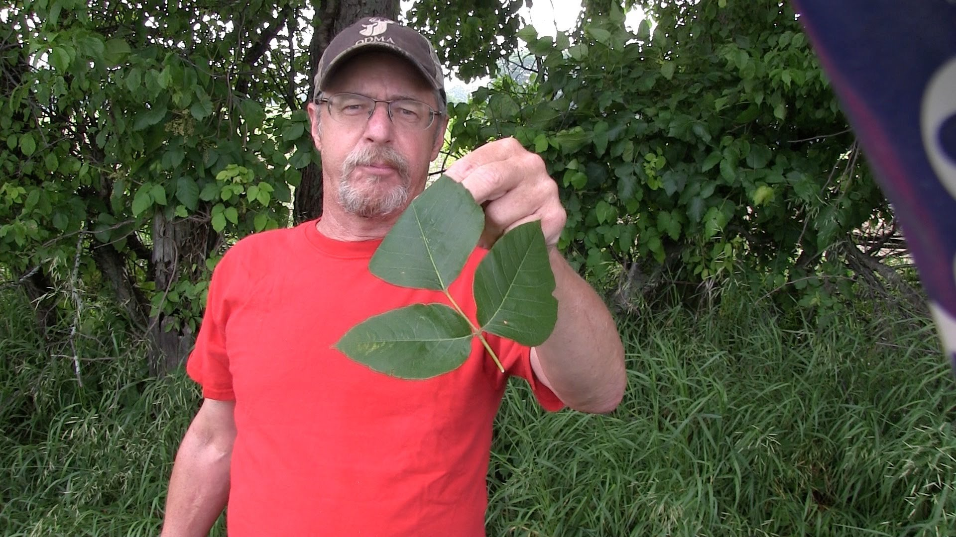 Man Stands Among Poison Ivy But Doesn't Get A Rash. Here's His SECRET!