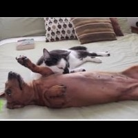 This Dachshund Gets Very Excited, How He Calms Down Will Drop Your Jaw! #UnlikelyFriendship!