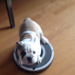 Watch This: This PUPPY Is Either Super Lazy or Super Efficient – What do You Think?