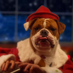 This Year's Christmas Just Got Super Adorable Thanks To Santa's Cats And Dogs!