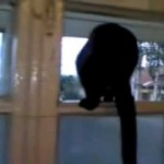Cat Barks At The Window, Then When She Gets Caught, She Starts Meowing!