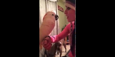 Disagreeable Cockatoo Gives Owner a Piece of His Mind!