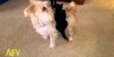 Have You Seen A Piggyback Riding Kitten? This Is Hilarious!
