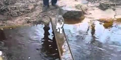 If Water Were Lava, This Clever Cat's Creative Solution Will Make You Laugh!