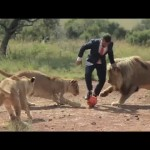 Playing Football With the Lions