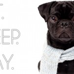 The Life Of A Pug…You're Going To Be So Jealous!