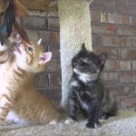 Tiny Adorable Kitten Is So Tired That He Takes A Tumble!