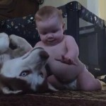 The Bond Between This Baby And His Husky Is just Incredible!