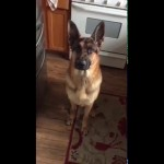 This German Shepherd Just Had A Meal, But Seconds Later, He Does THIS!