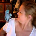 This Parakeet Knows How to Talk, Laugh And Play Peek-A-Boo! Talk About Skills!