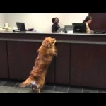 A Dog Walks Up To The Counter At A Bank And Does The CUTEST Thing!