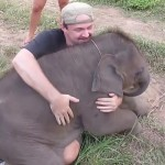 Baby Elephant Nears A Man And Does The Most Unbelievable Thing EVER!