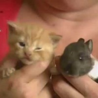Cat Finds An Orphaned Rabbit. What She Does Next Broke The Internet.