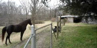 Dad's Horse Started Acting Strange. But When Dad Neared Him? I Don't Believe THIS.