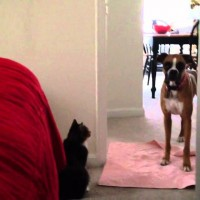 Dog Tries To Come Inside, Now Watch What The Cat Does…LOL