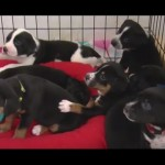 Mama Gave Birth To 10 Puppies. But There's One Thing Special About Each Of Them!