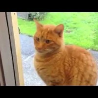 This Cat Is More Human Than Anyone. See What He Does When He Wants Back In!