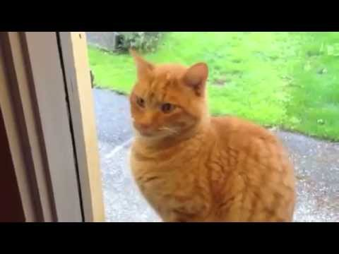 how to train cat to go outside and come back