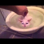 You Won't Believe What This Kitten Does In This Warm Bath