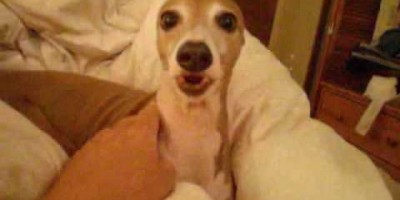 This Greyhound's Reaction To A Scary Story Is Incredible