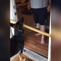 Find Out Why This Dog Never Gives Up