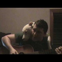 This Guy Started Playing Guitar For His Pit Bull…Then Suddenly The Pit Bull's Mood Changes