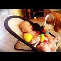 This Beagle Steals Baby Laura's Toy. Watch What He Does When She Becomes Sad!
