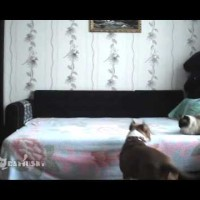 He Set Up A Hidden Camera To See What His Dog Was Up To Behind His Back. The Results? #Hilarious