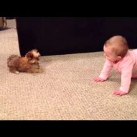 They Introduced Their New Puppy To Their Baby, Then Began A Hilarious Conversation!