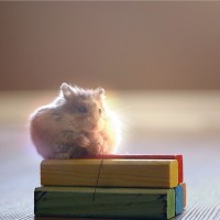 See How This Clever Little Hamster Gets the Treat!
