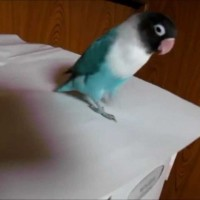 When You See This Tap Dancing Parrot, You're Going To Be Surprised!